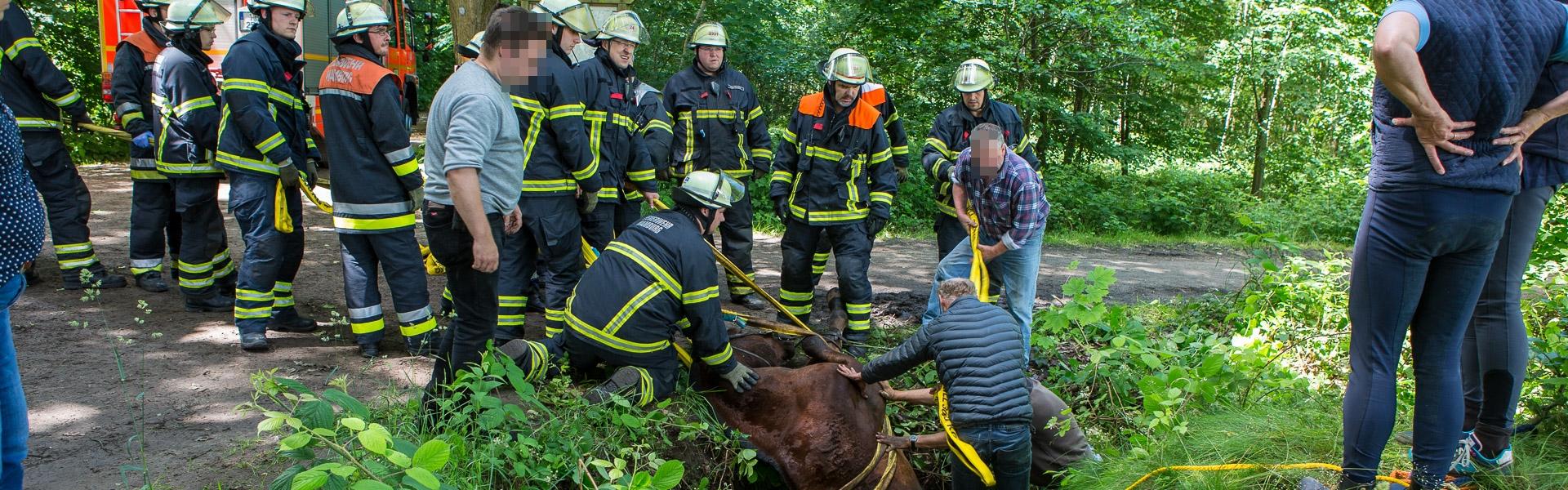 17.06.2017- Frau stürzt mit Pferd in Graben